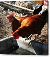 Chicken A La Carte Canvas Print