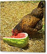 Chicken And Her Watermelon Canvas Print