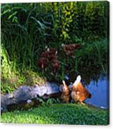 Chicken By The Pond Canvas Print