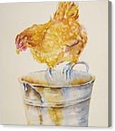 Chicken Feed Canvas Print