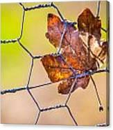 Chicken Wire Leaf. Canvas Print
