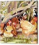 Chickens In The Hedge II Canvas Print