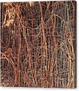 Chickenwire Rusty Canvas Print