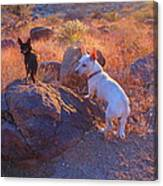 Chico And Paco The Mountain Dogs Canvas Print