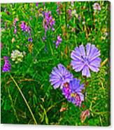 Chicory And Purple Vetch Along Rivier Du Nord Trail In Laurentians-quebec Canvas Print