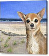 Chihuahua At Sea Isle City New Jersey Canvas Print