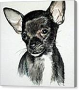 Chihuahua Black 2 Canvas Print