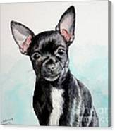 Chihuahua Black Canvas Print