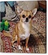 Chihuahua Cutie Canvas Print