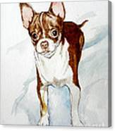 Chihuahua White Chocolate Color. Canvas Print