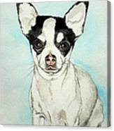 Chihuahua White With Black Spots Canvas Print