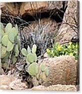 Chihuahuan  Desert Cacti Canvas Print