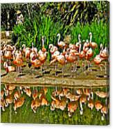 Chilean Flamingo Reflection In San Diego Zoo Safari Park In Escondido-california Canvas Print