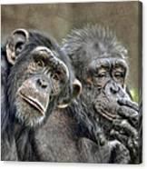 Chimp Couple Canvas Print