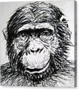 Chimp Canvas Print
