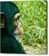 Chimpanzee Profile Canvas Print