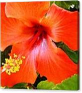 China Camp Hibiscus Canvas Print
