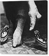 China: Lily Foot, C1900 Canvas Print