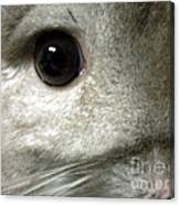 Chinchilla Face Canvas Print
