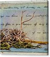 Chincoteague Driftoods Canvas Print