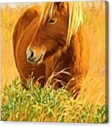 Chincoteague Pony Profile Canvas Print