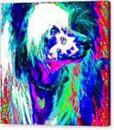 Chinese Crested Dog 20130125v3 Canvas Print