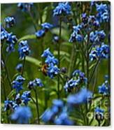 Chinese Forget Me Nots And Honey Bee Canvas Print
