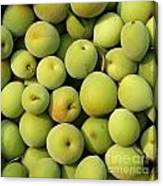 Chinese Green Plums Canvas Print