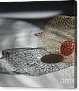 Chinese Lantern Plant - B Canvas Print