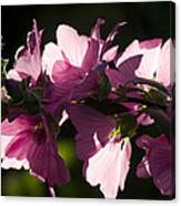 Chinese Mallow Canvas Print