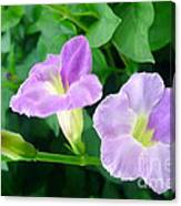 Chinese Violet  1 Canvas Print