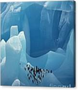 Chinstrap Penguins On Blue Iceberg Canvas Print