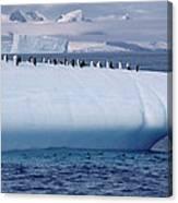 Chinstrap Penguins On Iceberg Canvas Print