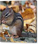 Chipmunk Hungry Canvas Print