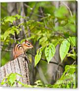 Chipmunk Shares Fence Post Canvas Print