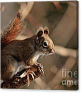 Chippy Perched Canvas Print