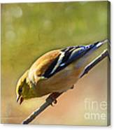 Chirping Gold Finch - Painted Effect Canvas Print