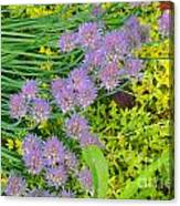Chives 3 Canvas Print