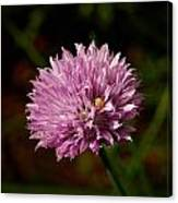 Chives Canvas Print