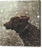 Chocolate Lab In Water Watercolor Portrait Canvas Print