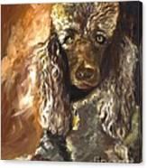 Chocolate Poodle Canvas Print