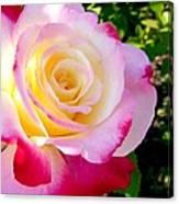 Choice Garden Rose Canvas Print