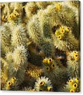Cholla Cactus Garden Mirage Canvas Print
