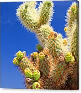 Cholla Cactus I By Diana Sainz Canvas Print