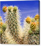 Cholla Cactus In Joshua Tree By Diana Sainz Canvas Print