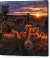 Cholla Garden Canvas Print