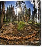 Chop Up Log Canvas Print