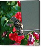 Chow Time At The Bird Feeder Canvas Print