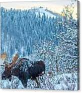 Christie Moose Canvas Print