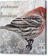 Christmas Blessings Finch Greeting Card Canvas Print